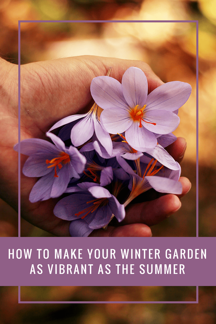 How To Make Your Winter Garden As Vibrant As The Summer