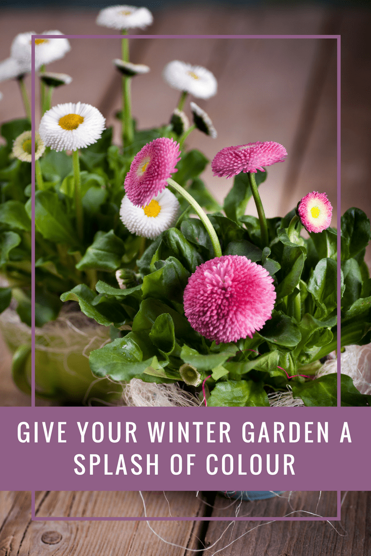 The best plants to give your winter garden a splash of colour