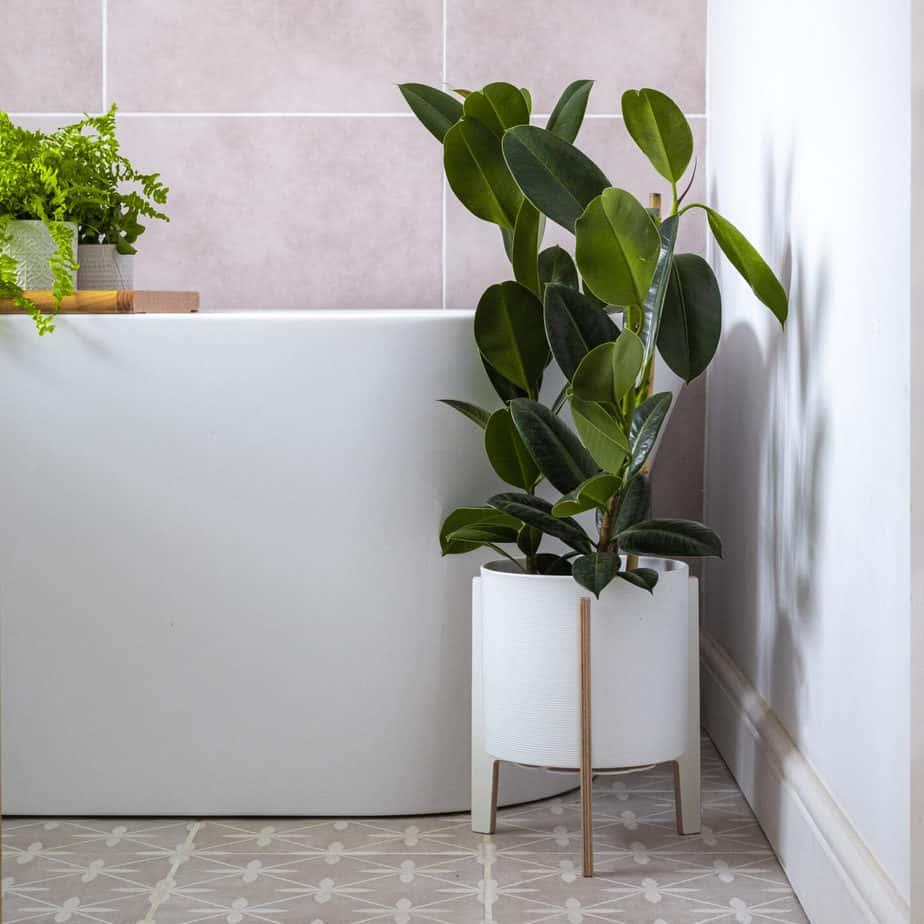 Circa houseplants stand