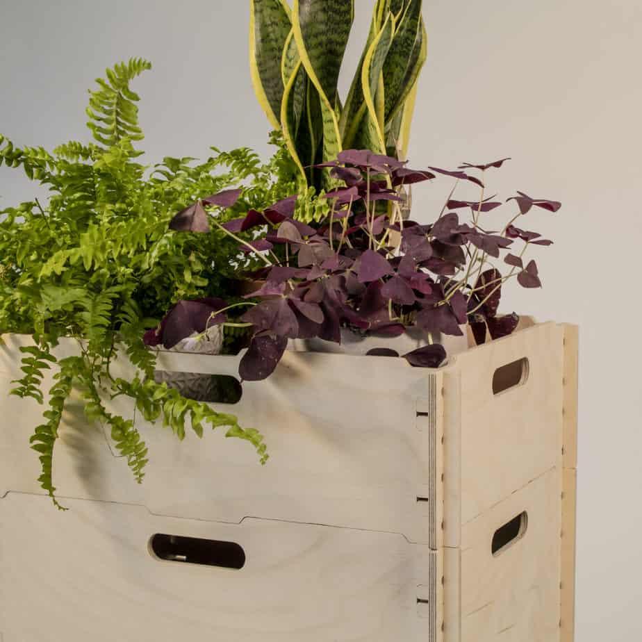 Circa houseplants storage boxes