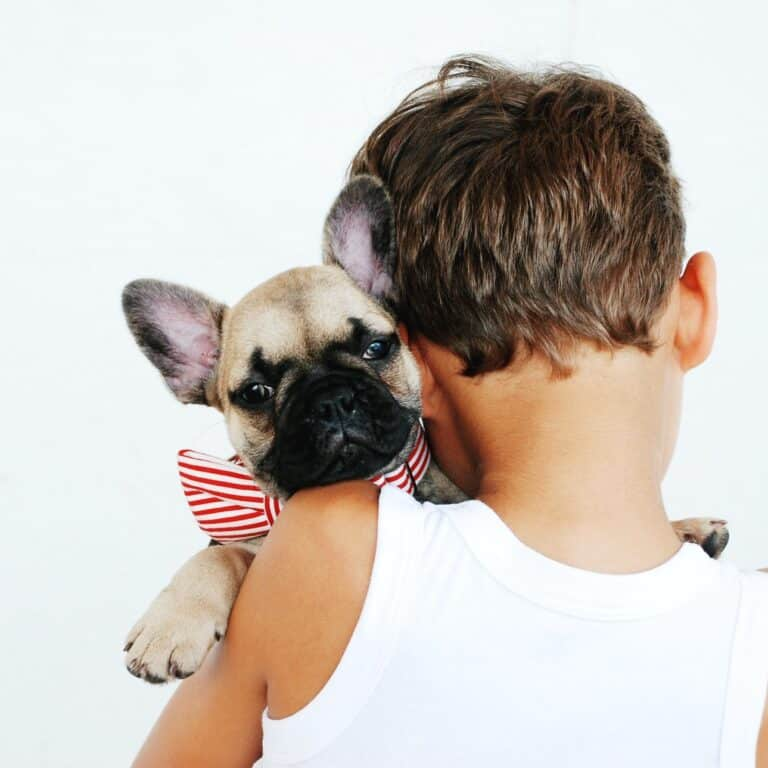 common mistakes you should avoid as a new pet owner