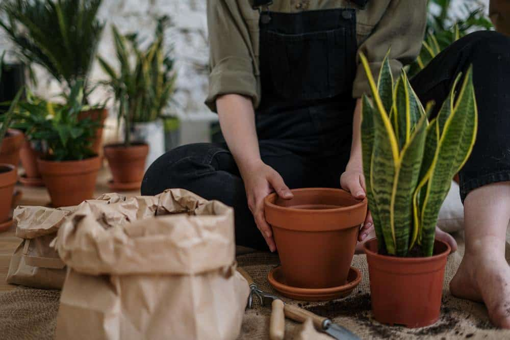 Fun In The Sun: 5 Ways To Transform Your Garden