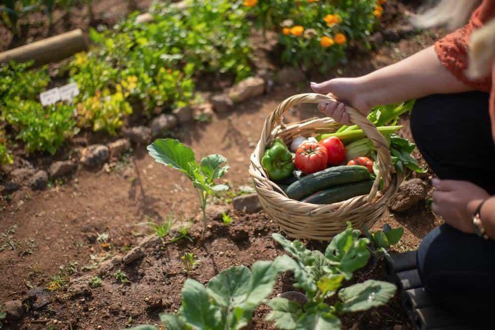 embrace your garden